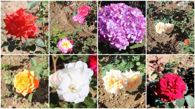 hill-village-and-garden-retreat-2