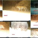 night pictures of mount abu wild animals
